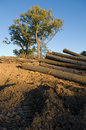 Free Logged Timber Stock Images - 1194904