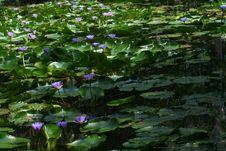 Free Blossom Stock Image - 1190511