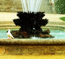 Fountain And Pigeon Stock Photo