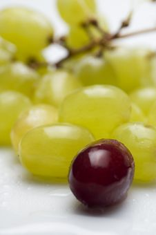 Free Grapes Stock Photo - 1194210