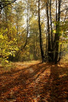 Free Autumn Forest Lane. Yellow Falled Leafs Stock Photo - 1194490