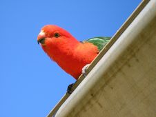 Free Pretty Bird Royalty Free Stock Photos - 1194698