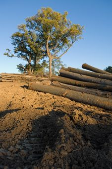 Logged Timber Stock Images