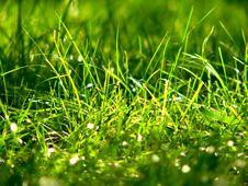 Free Dewy Grass Stock Photos - 1196623