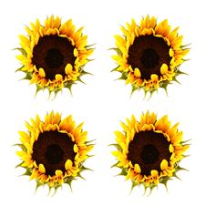 Free Sunflower Pattern Stock Photos - 1197113