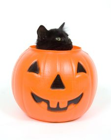 Free Black Cat And Plastic Pumpkin - Halloween Royalty Free Stock Photos - 1198538