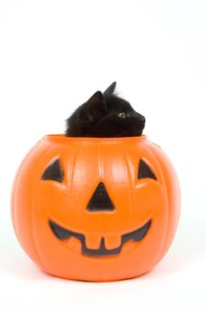 Free Black Cat And Plastic Pumpkin - Halloween Royalty Free Stock Photography - 1198547