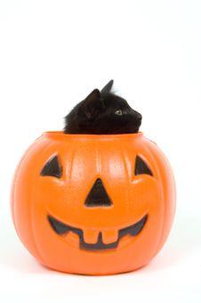 Black Cat And Plastic Pumpkin - Halloween Royalty Free Stock Photography
