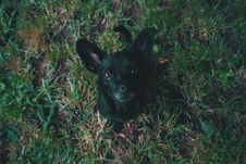 Free Aerial View Photography Of Black Puppy On Green Stock Photography - 119007912