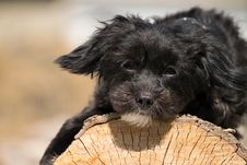 Free Dog, Dog Like Mammal, Dog Breed, Puppy Stock Photos - 119034333