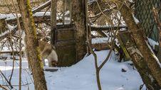 Free Winter, Snow, Branch, Tree Stock Image - 119034421