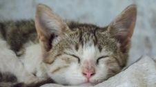 Cute Little Cat Kitten Sleeping Stock Photos