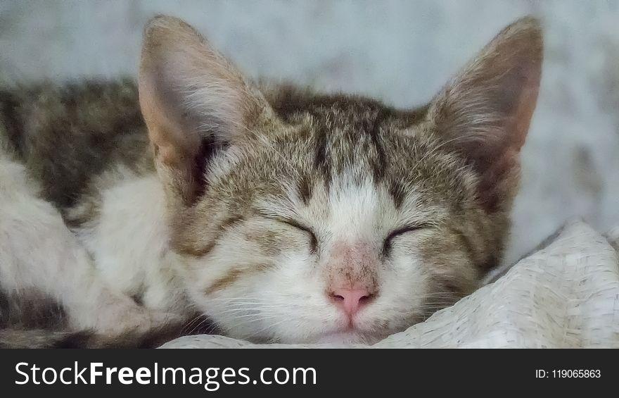 Cute Little Cat Kitten Sleeping
