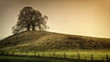 Free Silhouette Of Tree On Top Of The Hill Stock Photos - 119308633