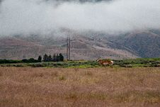 Free Landscape Photo Of Brown Deer On Field Royalty Free Stock Photography - 119308727