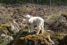 Free Wildlife, Mountain Goat, Sheep, Goats Stock Photography - 119317302