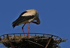 Free Stork, White Stork, Bird, Ciconiiformes Stock Images - 119317304