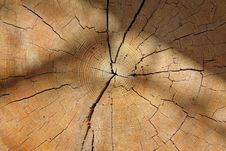 Free Wood, Close Up, Texture, Tree Stock Photo - 119317640