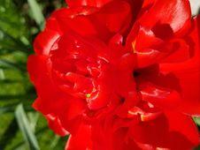 Free Flower, Floribunda, Flowering Plant, Plant Stock Photo - 119411650