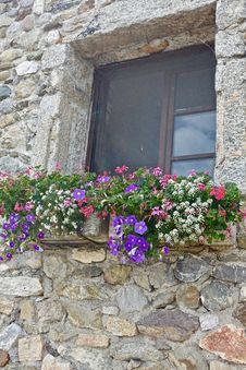 Free Flower, Plant, Wall, Window Royalty Free Stock Photo - 119411735