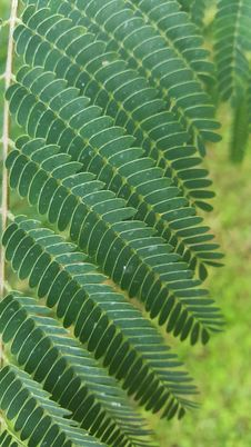 Free Vegetation, Plant, Leaf, Ostrich Fern Royalty Free Stock Images - 119411859