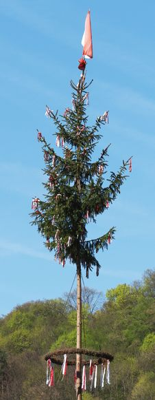 Free Tree, Sky, Woody Plant, Christmas Tree Royalty Free Stock Photos - 119411958