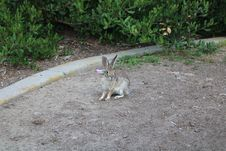 Free Fauna, Mammal, Wildlife, Wallaby Stock Photo - 119412210
