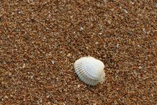 Free Cockle, Seashell, Clam, Sand Royalty Free Stock Image - 119412556