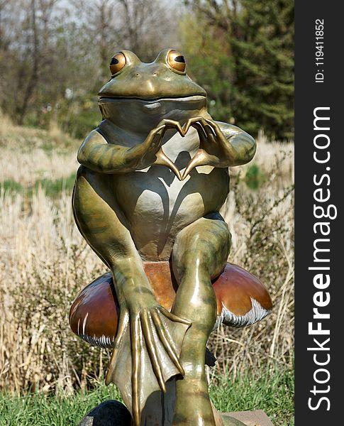 Ranidae, Frog, Amphibian, Vertebrate