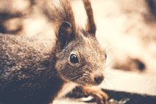 Free Closeup Photography Of Rodent Royalty Free Stock Image - 119467316