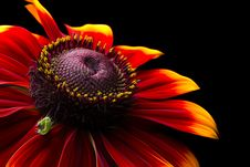 Free Closeup Photo Of Red-and-yellow Petaled Flower Stock Images - 119467364