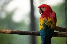 Free Photo Of Red, Blue, And Yellow Parrot On Tree Branch Stock Images - 119467374