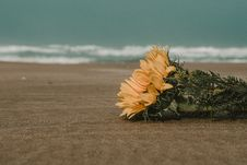 Free Yellow Flowers On Brown Sand Royalty Free Stock Photos - 119467458