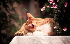 Free Orange Tabby Cat Royalty Free Stock Photos - 119467558