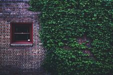 Free Brown Concrete Brick House Covered By Green Leaf Vines Royalty Free Stock Photo - 119467585