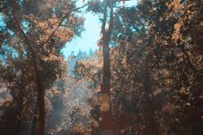 Free Ray Of Lights Passing Through Trees Royalty Free Stock Image - 119467636