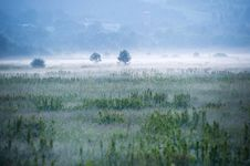 Free Foggy Green Field Royalty Free Stock Photography - 119467697