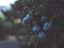 Free Selective Focus Photography Of Blue Flowers Royalty Free Stock Image - 119467706