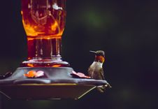 Free Selective Focus Photography Of Ruby-throated Hummingbird Perched On Bird Feeder Stock Photography - 119554142