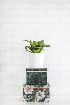 Free Potted Green Plant Near Wall Royalty Free Stock Images - 119554189
