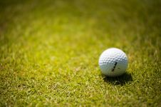 Free White Golf Ball On Green Grass Stock Photos - 119554243