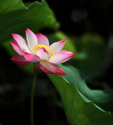 Free Shallow Focus Photo Of Pink And White Petaled Flower Royalty Free Stock Photo - 119611295