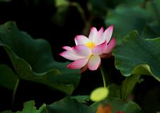 Free Selective Focus Photography Of Pink Petaled Flower In Bloom Royalty Free Stock Photo - 119611325