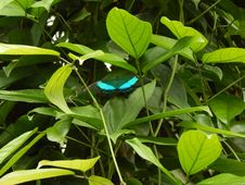 Free Leaf, Insect, Plant, Moths And Butterflies Stock Photos - 119766113