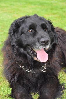 Free Dog, Dog Like Mammal, Dog Breed, Dog Breed Group Stock Image - 119766131