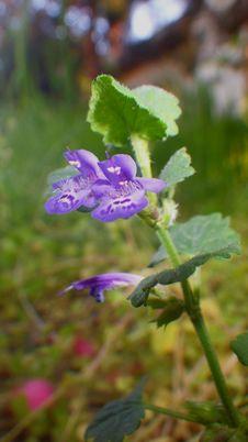 Free Flora, Flower, Plant, Bellflower Family Stock Photography - 119766982