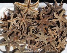 Free Starfish, Echinoderm, Dianhong Stock Images - 119767124