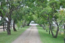 Free Tree, Vegetation, Plant, Grove Stock Photography - 119767152
