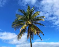 Free Sky, Tree, Palm Tree, Arecales Royalty Free Stock Images - 119767229