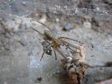 Free Spider, Arachnid, Wolf Spider, Fauna Stock Image - 119767371